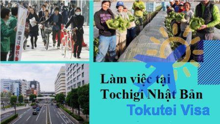 lao-dong-tai-tochigi-nhat-ban