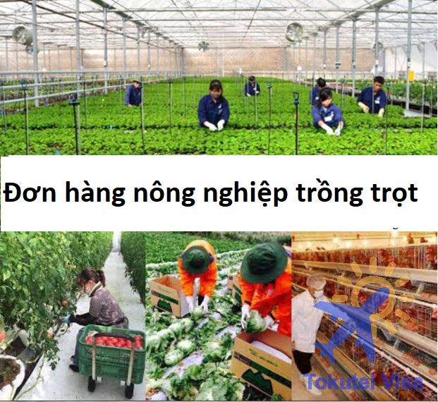 don-hang-nong-nghiep-trong-trot